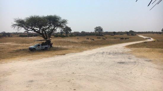 Hwange, Zimbabue: photo4.jpg
