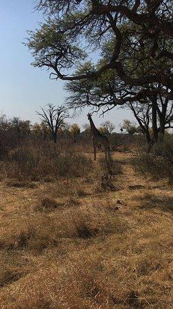 Hwange, Zimbabue: photo5.jpg