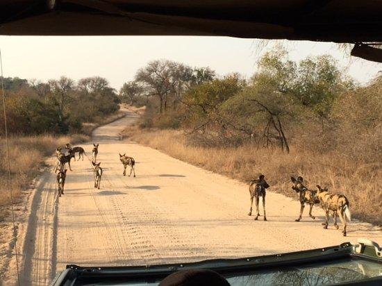Jock Safari Lodge: Kruger National Park