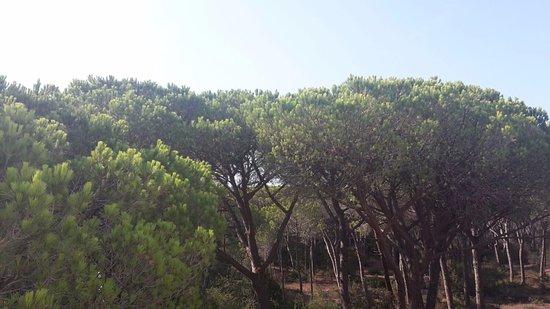 Principina a Mare, إيطاليا: Parco, vista dal terrazzino