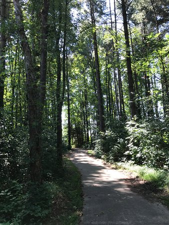Austin Badger Park: path through the pines