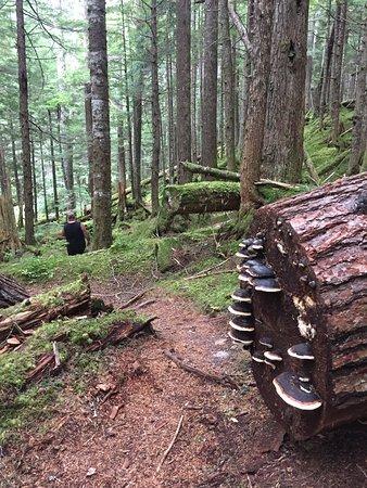 Hagensborg, Canadá: trail to falls