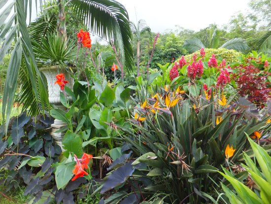 bright orange cannes yellow purple birds of paradise and red ginger