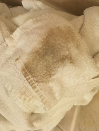 Bay Park Hotel: I wiped off the interior room door with a wash cloth. Gross.
