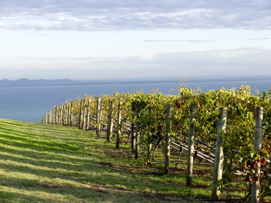 Geelong, Australia: Wineries