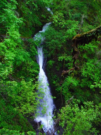 Columbia River Gorge: One of many falls along highway 30