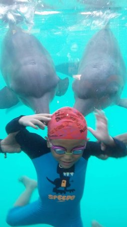 Batang Dolphin Center: swim and play