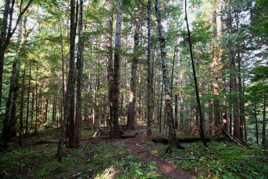 Bella Coola, Canada: Great Bear Rain Forest