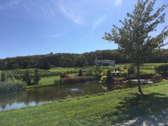Beamsville, Canada: View of the vines and pond on location