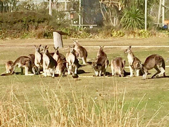 Bicheno, Australia: photo9.jpg