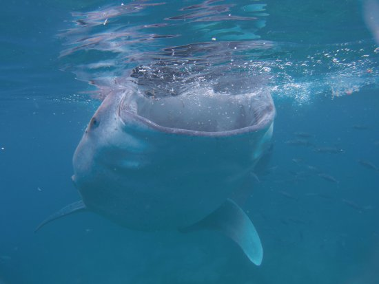George Whale Shark Watching and Tours
