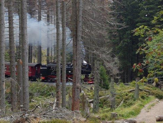 Wernigerode, Germany: Die Brockenbahn auf den Weg zum Gipfel