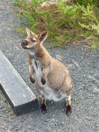 Freycinet, ออสเตรเลีย: photo3.jpg