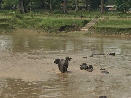 Narayani River : photo0.jpg