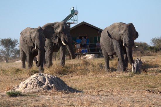 Nata, Botsuana: Elephant highway and tent no 20
