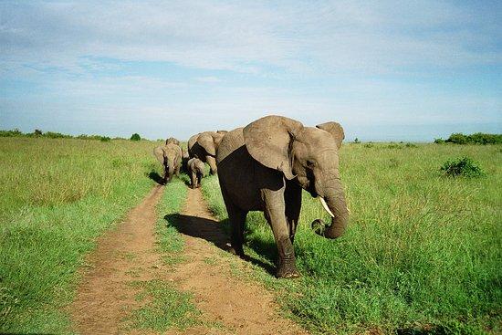 """Erbach, Deutschland: noch """"lebendes Elfenbein"""", 1997 in Kenia fotografiert"""