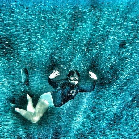 Pescador Island: Sardines Run