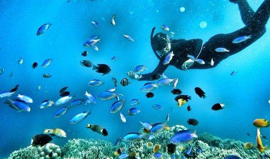 Pescador Island: Fish feedig