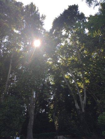 Jardin Botanico Historico La Concepcion : photo6.jpg