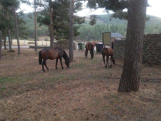 Laroles, Spanien: Animales de la zona