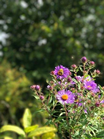 Alton, Canada: Wildflower