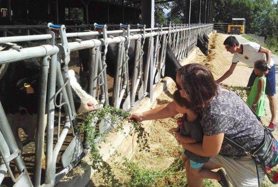 Joanetes, สเปน: dando de comer a las vacas