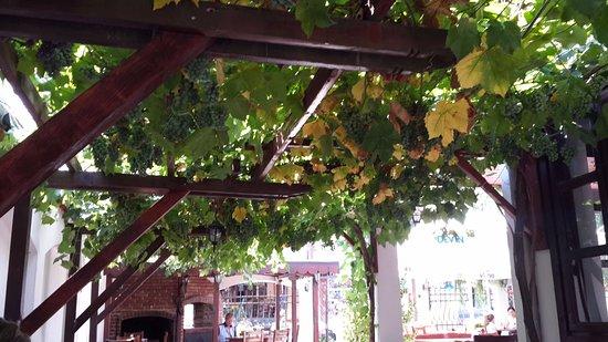 Kranevo, Bulgaria: Столики расположены под виноградной лозой