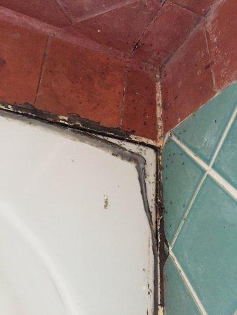 Hansa Beach Resort: just a few of the ants..