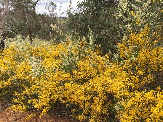 Bullsbrook, Australie : Walyunga National Park