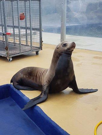 Gweek, UK: Grey Seal