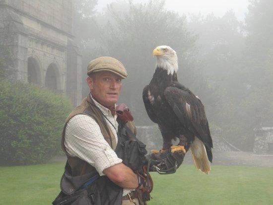 North Bovey, UK: Falcony display - the bald eagle.