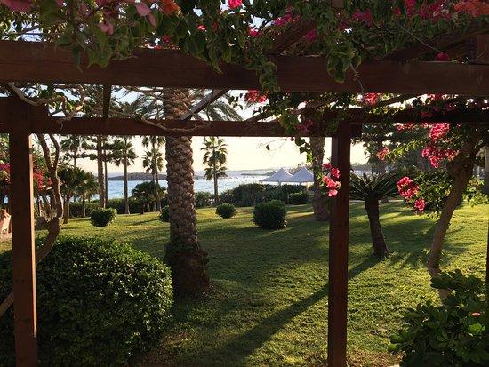 Nissi Beach Resort : photo1.jpg