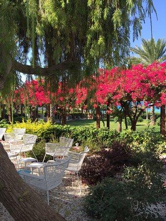 Nissi Beach Resort : photo2.jpg