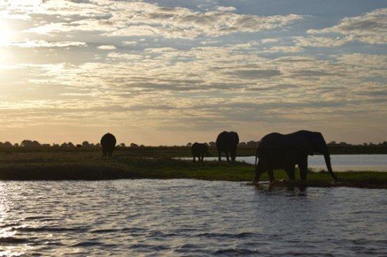 Chobe River Boat Cruises: Crucero por el Rio Chobe al atardecer