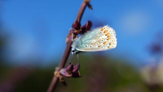 Circle Of Life Commemorative Garden: Butterfly In Garden