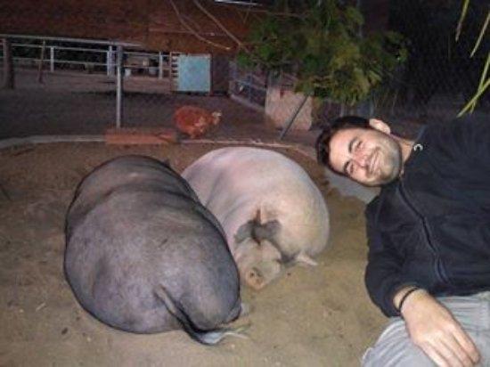 Vinyols i Els Arcs Photo