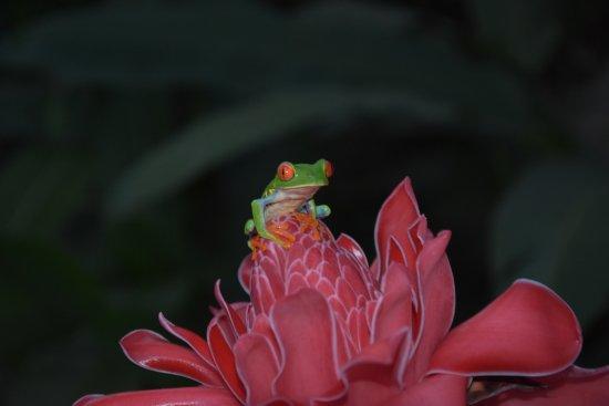 Frogs Heaven: Eines von vielen Fröschen die wir dort sehen konnten