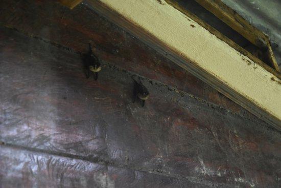 Puerto Viejo de Sarapiqui, Costa Rica: Zimmeraussicht auf die Fledermäuse, die Kinder hatten Freude