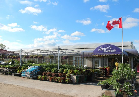Kingsville, Canadá: photo4.jpg
