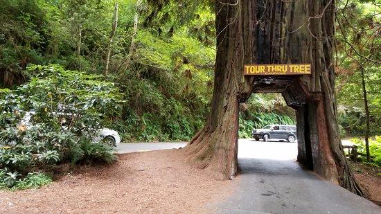 Tour-Through Tree: Drive through tree