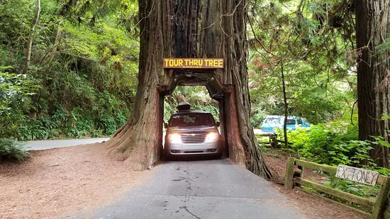 Klamath, Kaliforniya: Drive through tree