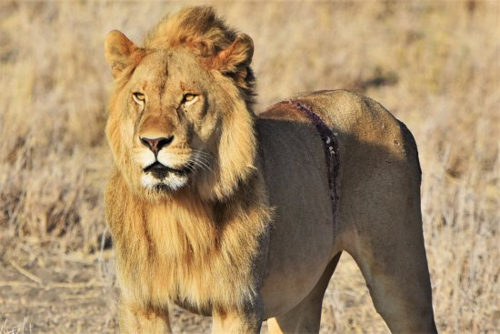 Priva Safaris and Adventures