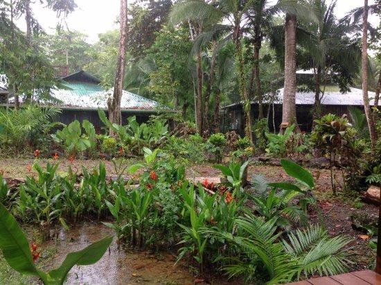 Foto de La Chosa del Manglar Nature Resort