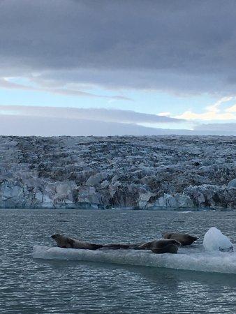 Hofn, Islândia: photo2.jpg