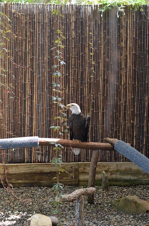 Kure Beach, NC: Bald Eagle!