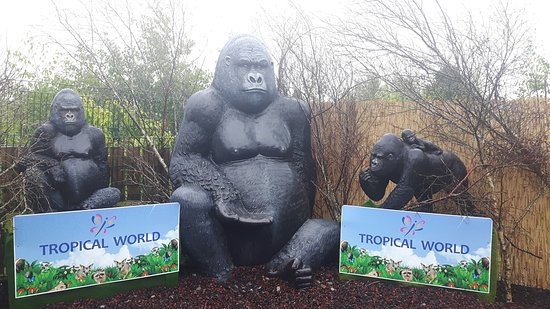 Letterkenny, Ireland: Tropical World