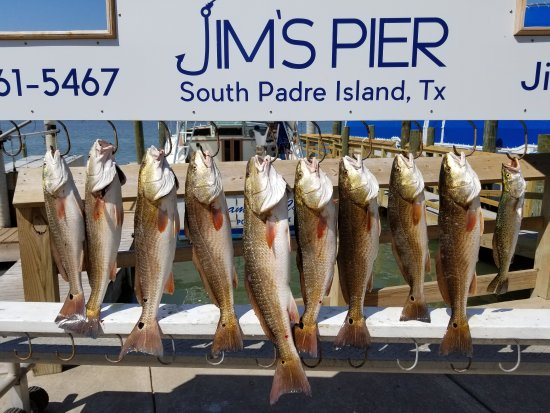 Awesome fishing got to do it picture of always a catch for South padre island fishing trips