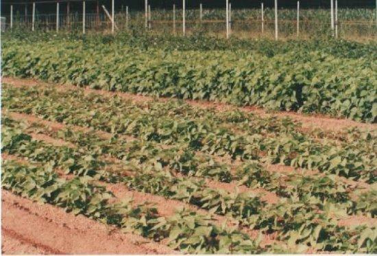 Pove del Grappa, Italia: Le nostre coltivazioni