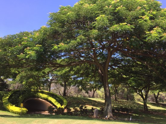 Kahili Golf Course: Tunnel between holes