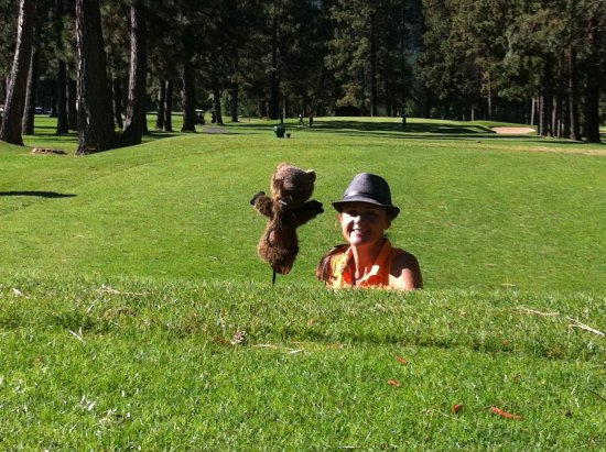 Kimberley, Canada: Wild animals on the tee box of the 7th hole